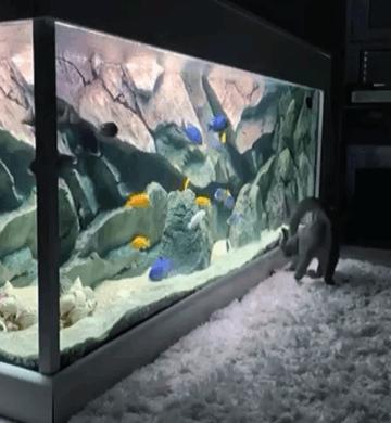 аквариум превью